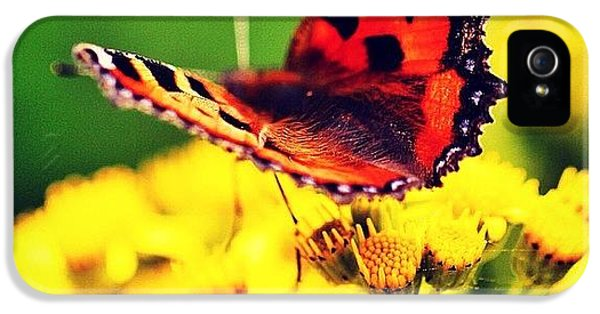 #macro #nature #flowers #butterfly IPhone 5 Case