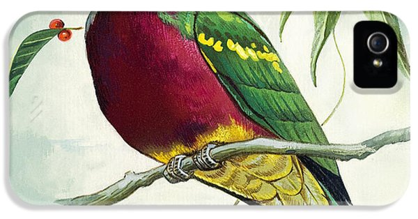 Magnificent Fruit Pigeon IPhone 5 Case by Bert Illoss