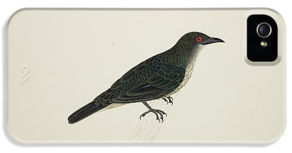 Starlings iPhone 5 Case - Malay Glossy Starling by British Library