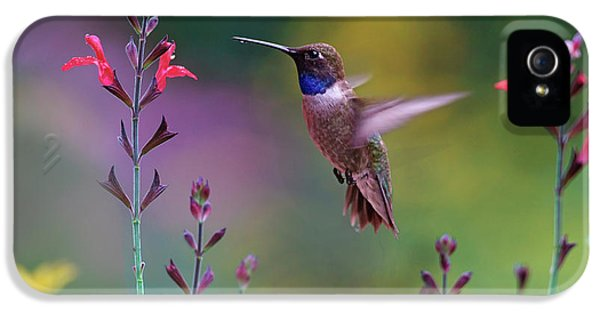 Male Black-chinned Hummingbird IPhone 5 Case