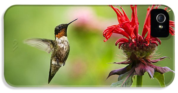 Male Ruby-throated Hummingbird Hovering Near Flowers IPhone 5 Case by Christina Rollo