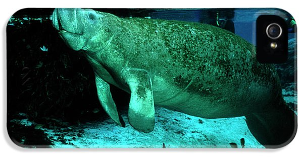 Breathe iPhone 5 Case - Manatee At Surface by Rudiger Lehnen/science Photo Library