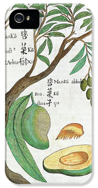 Mango Tree And Fruit IPhone 5 Case by Natural History Museum, London