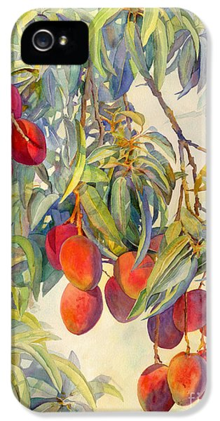 Mangoes In The Evening Light IPhone 5 Case by Dorothy Boyer