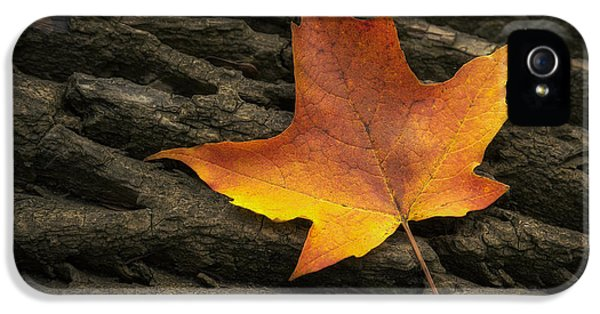 Maple Leaf IPhone 5 Case by Scott Norris