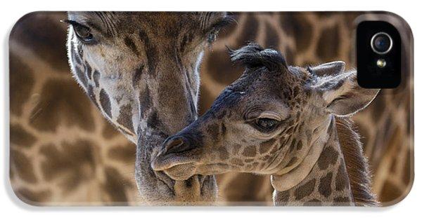 Masai Giraffe And Calf IPhone 5 Case by San Diego Zoo