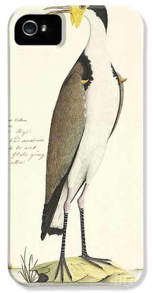 Masked Lapwing, 18th Century IPhone 5 / 5s Case by Natural History Museum, London