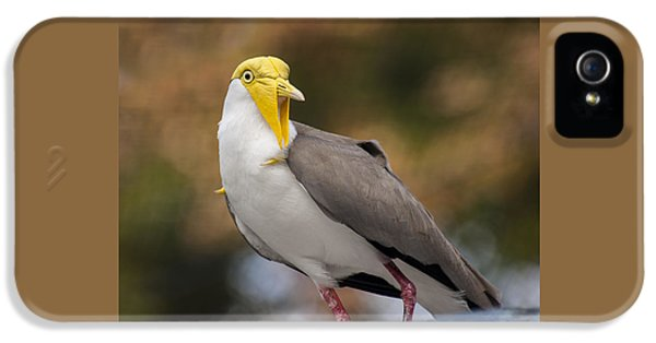 Masked Lapwing IPhone 5 Case by Carolyn Marshall