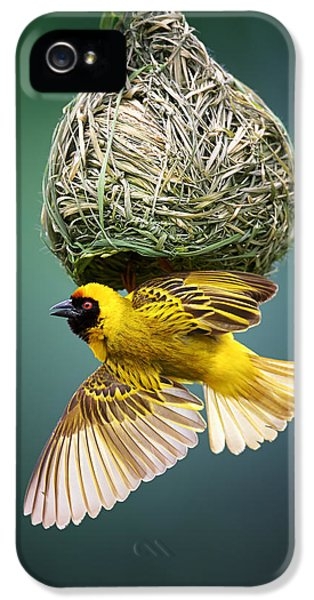 Masked Weaver At Nest IPhone 5 Case by Johan Swanepoel