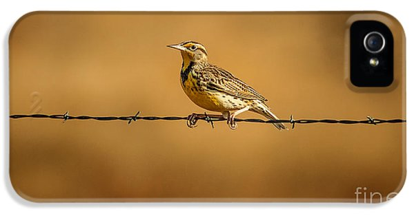 Meadowlark And Barbed Wire IPhone 5 / 5s Case by Robert Frederick