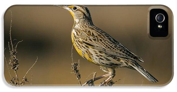 Meadowlark On Weed IPhone 5 Case by Robert Frederick