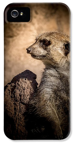Meerkat 12 IPhone 5 Case by Ernie Echols