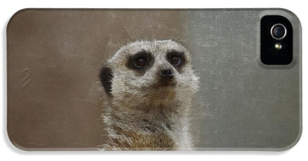 Meerkat 5 IPhone 5 Case by Ernie Echols