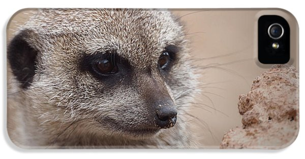 Meerkat 7 IPhone 5 Case by Ernie Echols