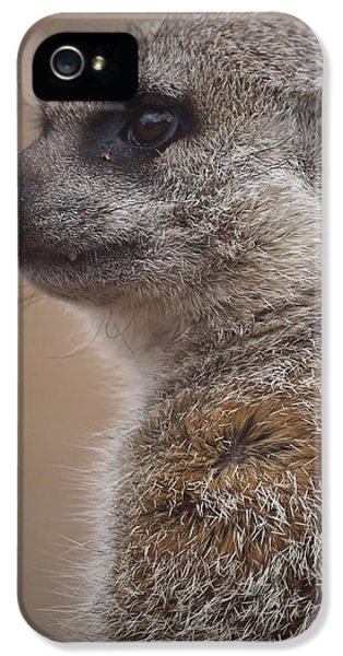 Meerkat 9 IPhone 5 Case by Ernie Echols