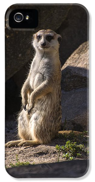 Meerkat Looking Forward IPhone 5 Case by Chris Flees