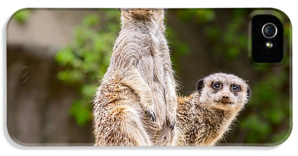 Meerkat Pair IPhone 5 Case by Jamie Pham