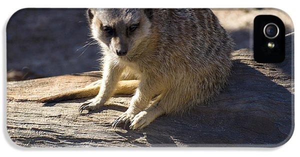 Meerkat Resting On A Rock IPhone 5 / 5s Case by Chris Flees