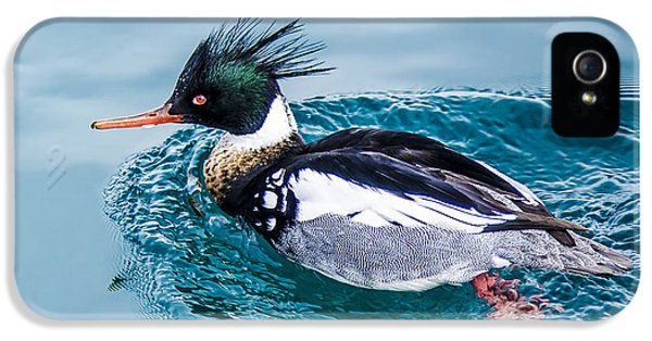 Merganser Duck IPhone 5 Case