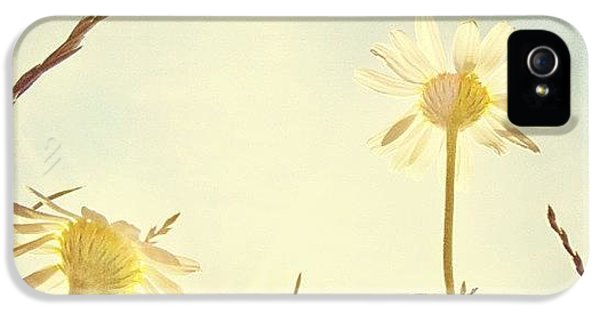 #mgmarts #daisy #all_shots #dreamy IPhone 5 Case by Marianna Mills