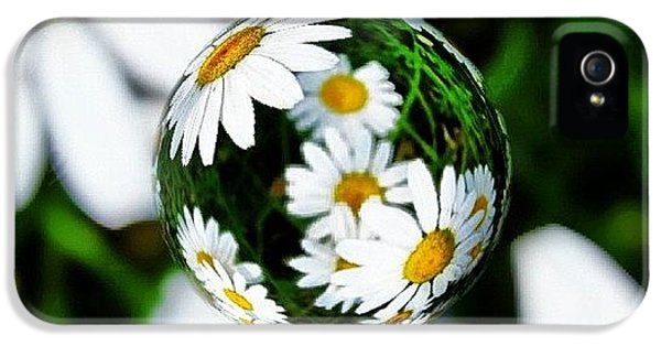 #mgmarts #daisy #flower #weed #summer IPhone 5 Case