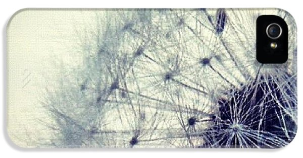 Sky iPhone 5 Case - #mgmarts #dandelion #love #micro by Marianna Mills