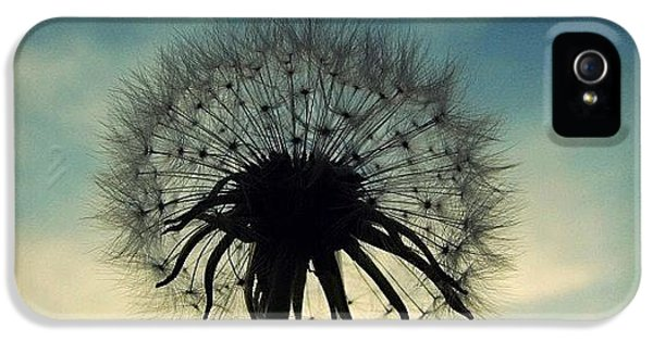 #mgmarts #dandelion #weed #sunset #sun IPhone 5 Case by Marianna Mills