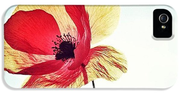 #mgmarts #poppy #nature #red #hungary IPhone 5 Case