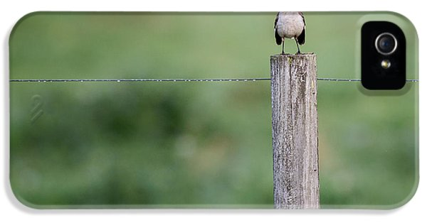 Minimalism Mockingbird IPhone 5 Case by Bill Wakeley