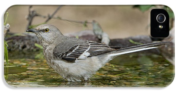 Mockingbird IPhone 5 Case by Anthony Mercieca