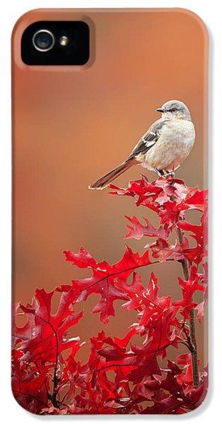 Mockingbird Autumn IPhone 5 Case