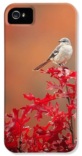 Mockingbird Autumn IPhone 5 Case by Bill Wakeley