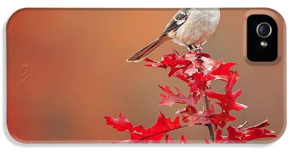 Mockingbird Autumn Square IPhone 5 Case