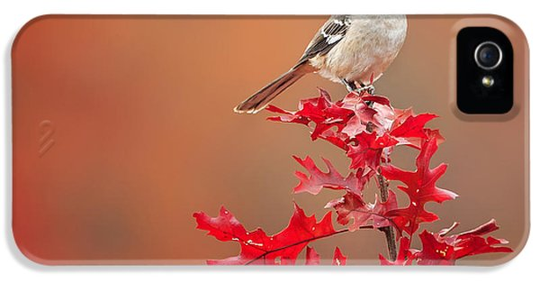 Mockingbird Autumn Square IPhone 5 Case by Bill Wakeley