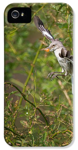 Mockingbird IPhone 5 Case by Bill Wakeley