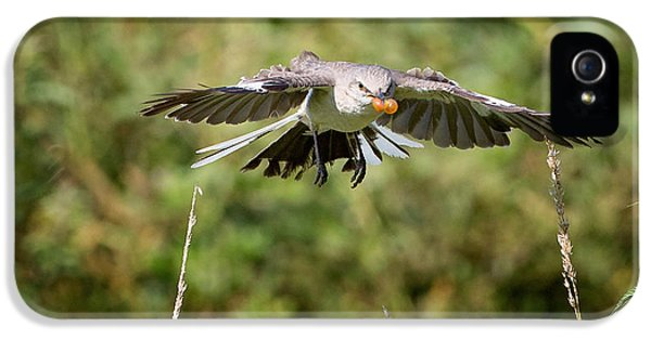 Mockingbird In Flight IPhone 5 Case by Bill Wakeley