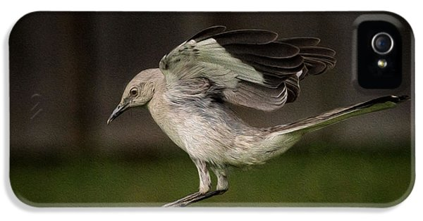 Mockingbird No. 2 IPhone 5 Case by Rick Barnard