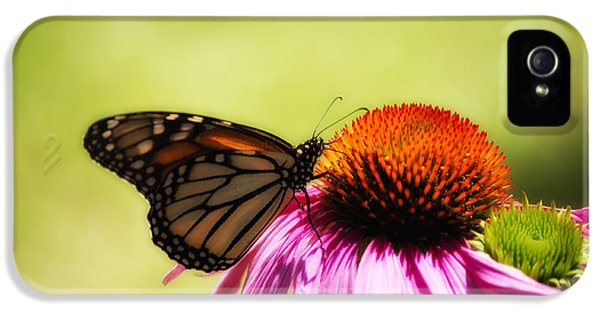 Monarch Glow IPhone 5 Case by Shelly Gunderson