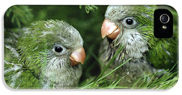Monk Parakeet Chicks IPhone 5 Case by Paul J. Fusco
