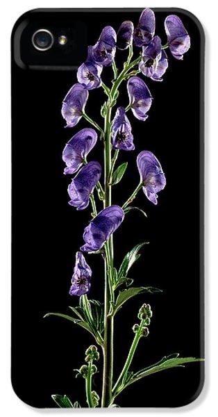 Monkshood (aconitum Napellus) Flowers IPhone 5 Case