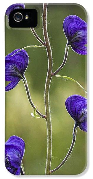 Monkshood Blooming In An Alpine Meadow IPhone 5 Case