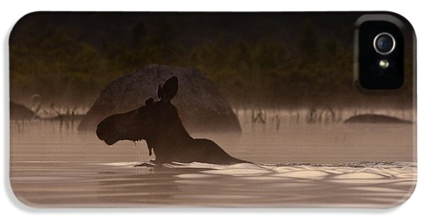 Moose Swim IPhone 5 Case by Brent L Ander