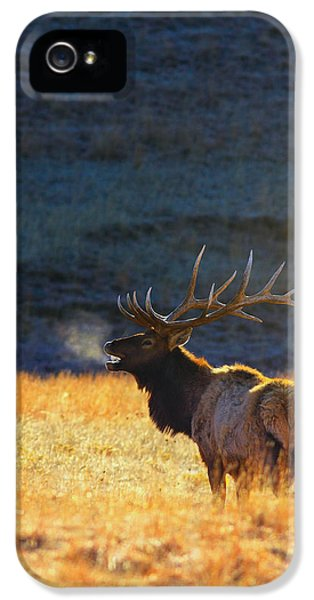 Animals iPhone 5 Case - Morning Breath by Kadek Susanto