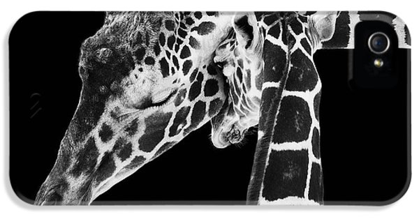 White iPhone 5 Case - Mother And Baby Giraffe by Adam Romanowicz