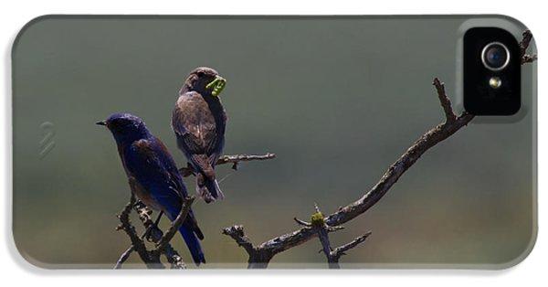 Mountain Bluebird Pair IPhone 5 Case by Mike  Dawson