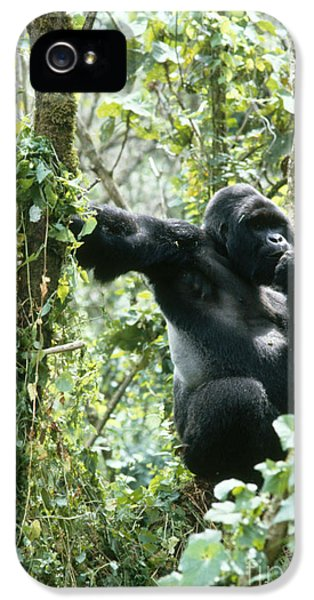 Mountain Gorilla IPhone 5 Case by Tierbild Okapia