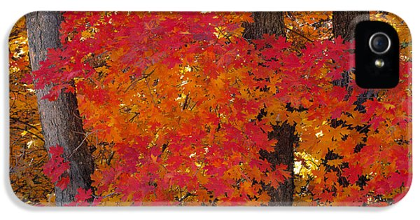 Mountain Maple Tree IPhone 5 Case by Leland D Howard