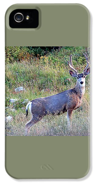 IPhone 5 Case featuring the photograph Mule Deer Buck by Karen Shackles