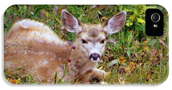 IPhone 5 Case featuring the photograph Mule Deer Fawn by Karen Shackles