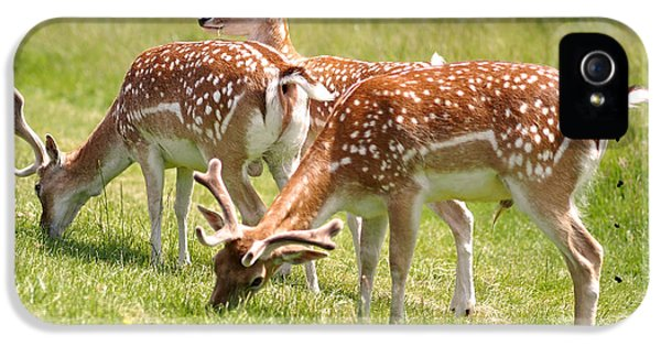 Multitasking Deer In Richmond Park IPhone 5 Case by Rona Black